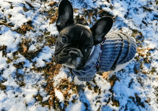 [VIDEO] Vole li francuski buldozi snijeg? Naravno!
