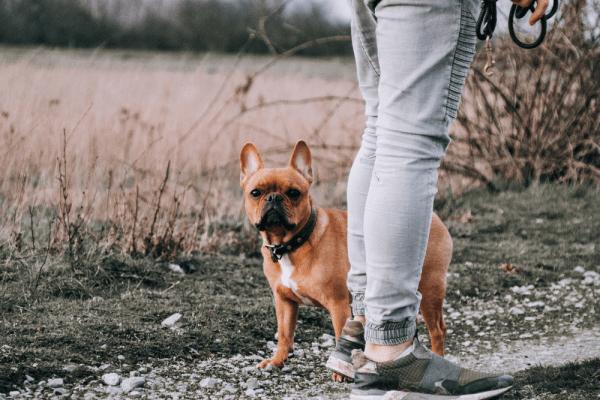 Zašto pas jede izmet?