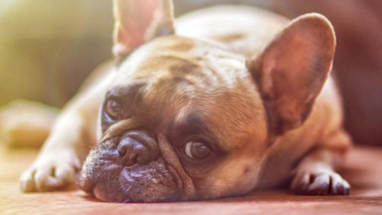 Zaštitite pse od petardi