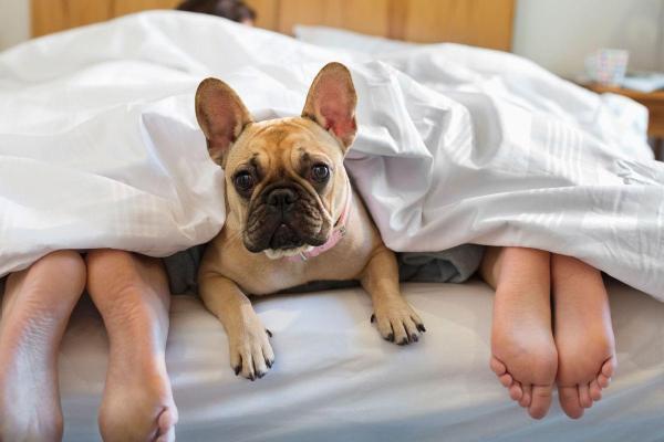 Evo zašto bi tvoj pas trebao spavati s tobom u krevetu svaki dan