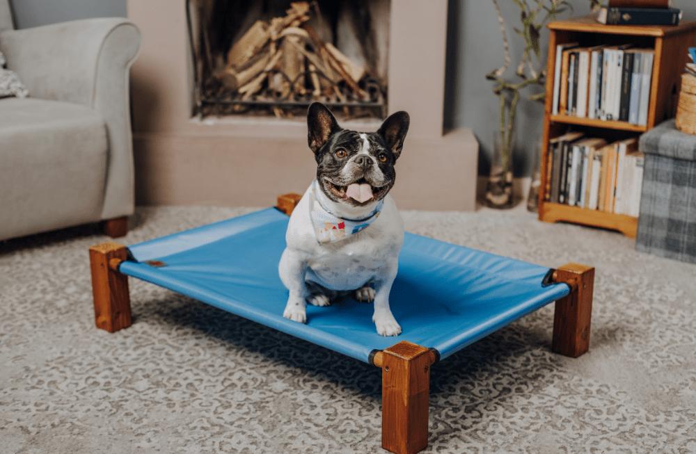Kako utišati nekontrolirano lajanje psa