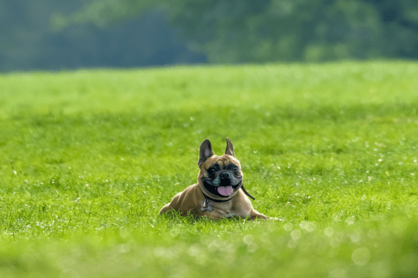 Stiglo je proljeće: Kako zaštititi psa od buha i krpelja