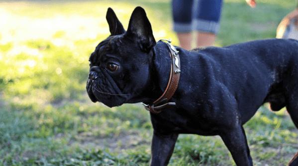10 savjeta za zdravu i sjajnu dlaku psa