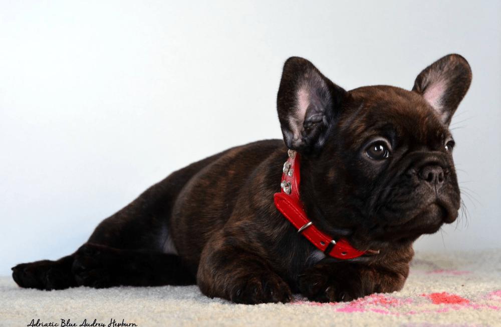 Opasno je odvajati ih prerano: Kada se štene smije odvojiti od majke?