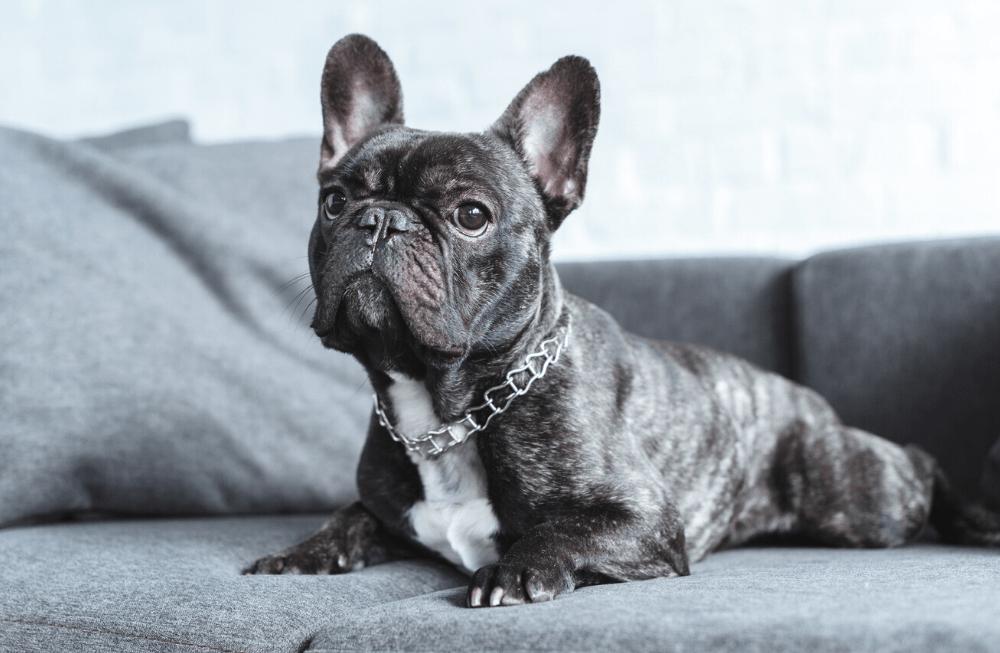 Želite štene svoje kujice? Evo zašto biste od toga trebali odustati