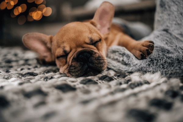 Kako naučiti štene na obavljanje nužde vani?