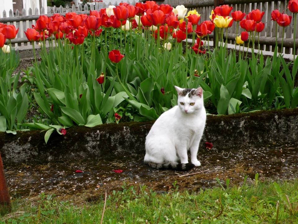 Spring in Hindelang, Bavaria, Germany.