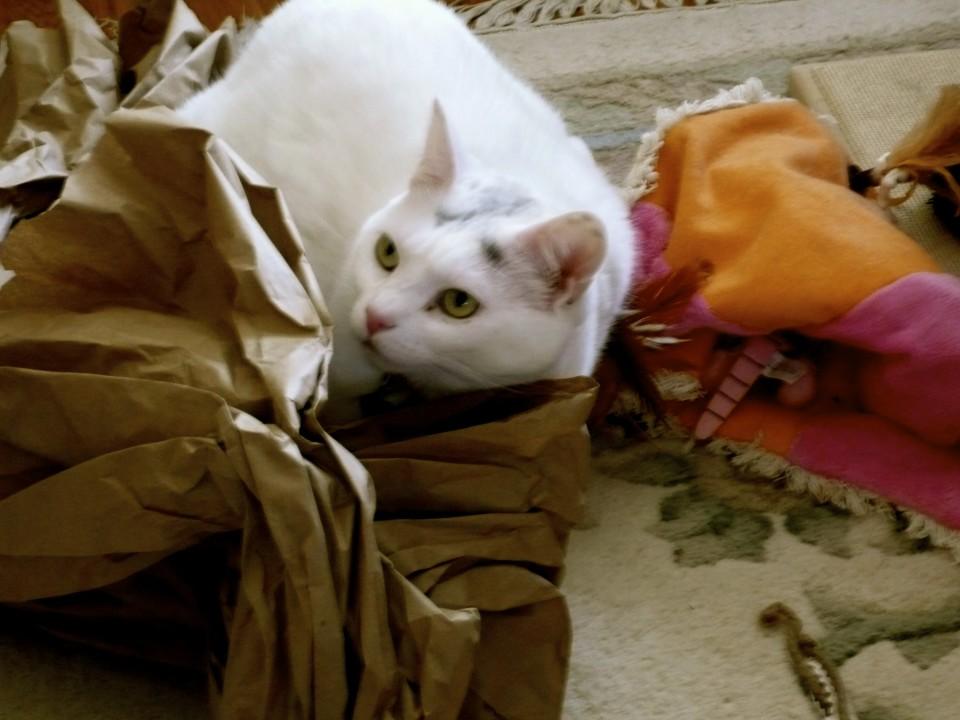 Kitty #3: Daisy (Lily's litter mate)