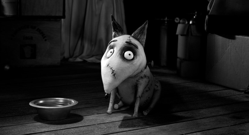 Frankenweenie, everyone's favourite zombie pet.