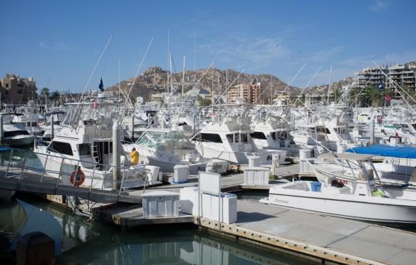 Cabo San Lucas fishing fleet will take you deep sea fishing.