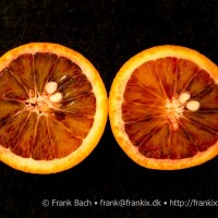 [:da]Marmelade af blodappelsiner[:en]Jam of blood oranges[:]