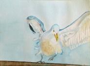 Gestatten Emma (c) ein Möwen Aquarell von FRank Koebsch
