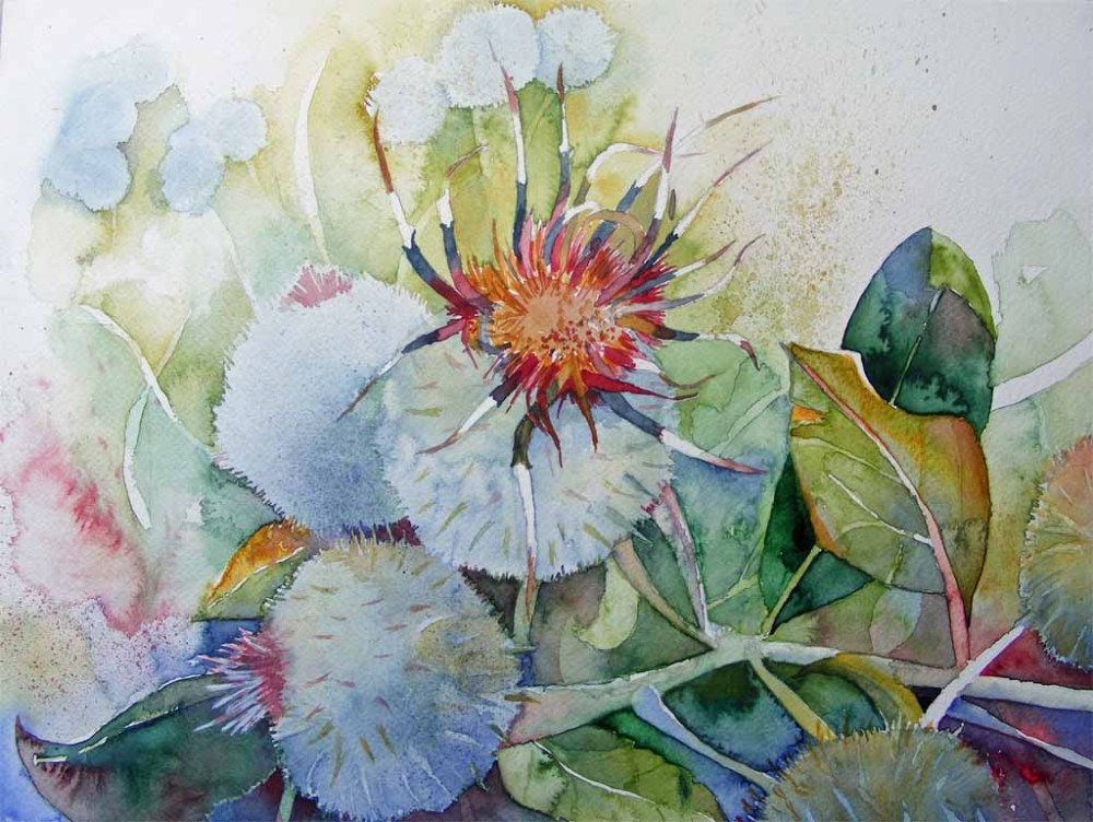 Distel Aquarelle (5/6)