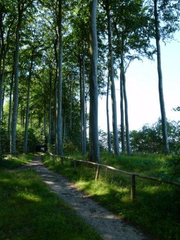 Küstenwald bei Heiligendamm (c) FRank Koebsch