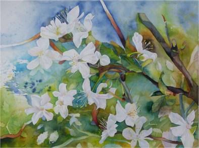 Wildwuchs in der Obstblüte (c) Aquarell von FRank Koebsch