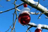 Weihnachtsschmuck an einer Eberesche (c) Frank Koebsch (1)