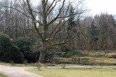 alte Bäume und Rhododendron im Schlosspark Wiligrad (c) FRank Koebsch (1)