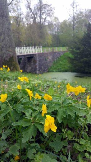 Frühling im Schlosspark Griebenow (c) Frank Koebsch