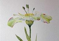 Aquarell der Kunstblume Lore (c) Hanka Koebsch (3)