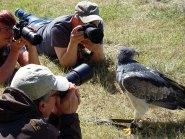 Tierisch gut! – Greifvögel vor der Kamera (c) Hanka Koebsch