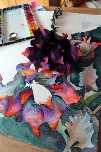 Abgleich zwischen Aquarell und der Blume des Flussteufels aus Sebnitz (c) Frank Koebsch (2)