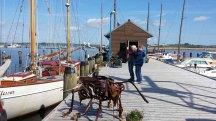 Malschüler auf Motivsuche im Hafen von Gager (c) Frank Koebsch