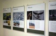 Ausstellung über Adler in der Nationalpark-Information Schwarzenhof (c) Frank Koebsch