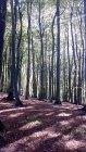 Buchenwald im Nationalpark Jasmund (c) Frank Koebsch (2)