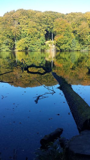 Herbst am Herthasee im Nationalpark Jasmund (c) Frank Koebsch (1)