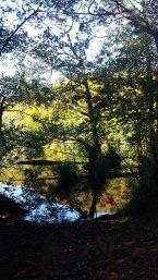 sonniger Herbst am Herthasee im Nationalpark Jasmund (c) Frank Koebsch (2)