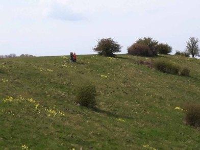 Frühlingsspaziergang auf den Bergen von Groß Zicker (c) Frank Koebsch