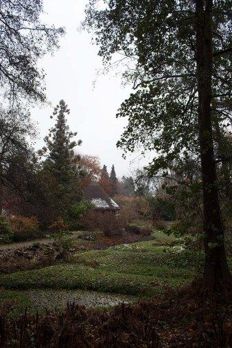 Reetdachhaus im herbstlichen Japangarten des Botanischen Garten Rostock (c) Frank Koebsch (2)