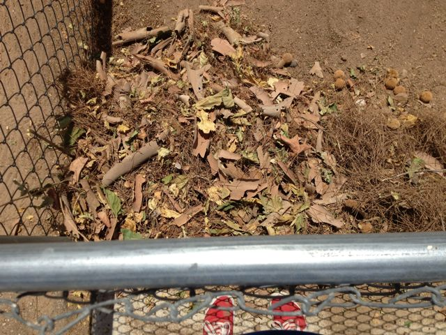Leaves, pine needles and debris in the corner of a chainlink fence