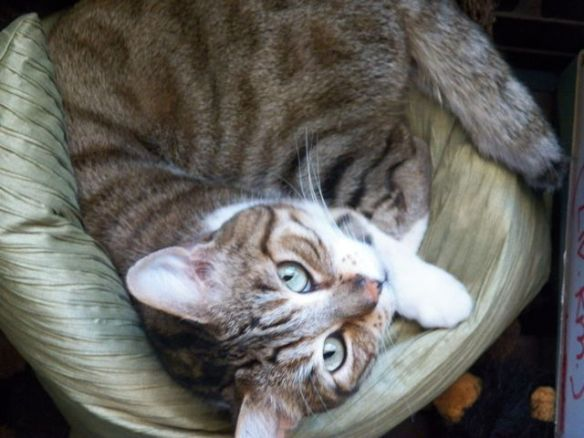 Grey and white tabby cat on green pillow