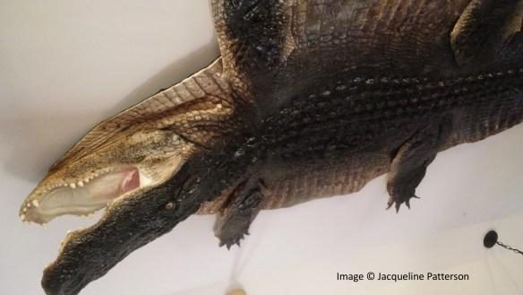 Paige's Plantation - Alligator on the Ceiling