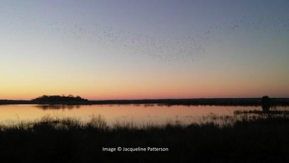 Paige's Plantation - Marsh Birds
