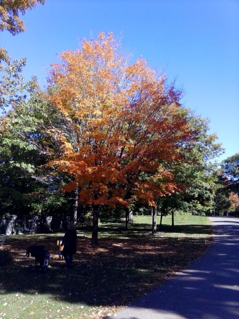 Fall Colours Rideau Hall, by photoblogger William Kendall