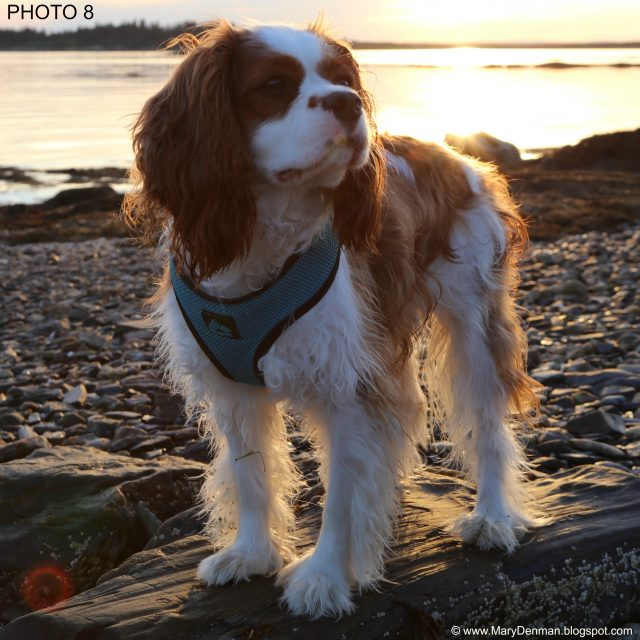 CAVALIER PHOTO 8 (Mary Denman, Photographer)