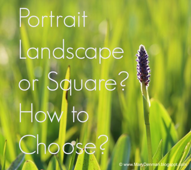 Portrait, Landscape or Square? Meme by Mary Denman, Photographer