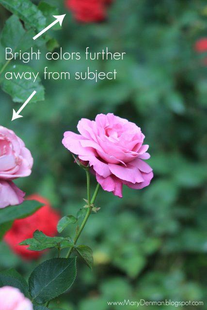 Mary Denman: pink rose 2