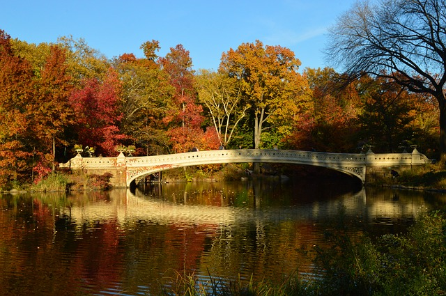 Frankly, My Dear . . . : Central Park, NYC