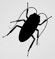 kukaracsa cucaracha