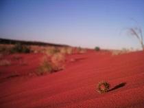sivatagi tura frankpeti