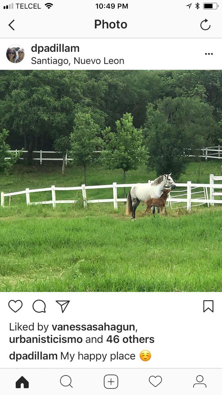 dani's horse farm
