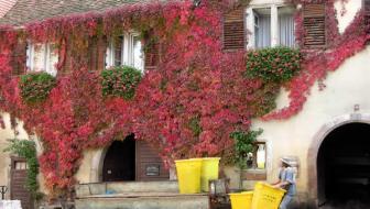 De Elzas in de herfst en de wijnroute