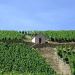 Van bierdrinker tot wijndrinker door Chablis