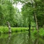 Ontdek het Marais Poitevin in Poitou-Charentes!