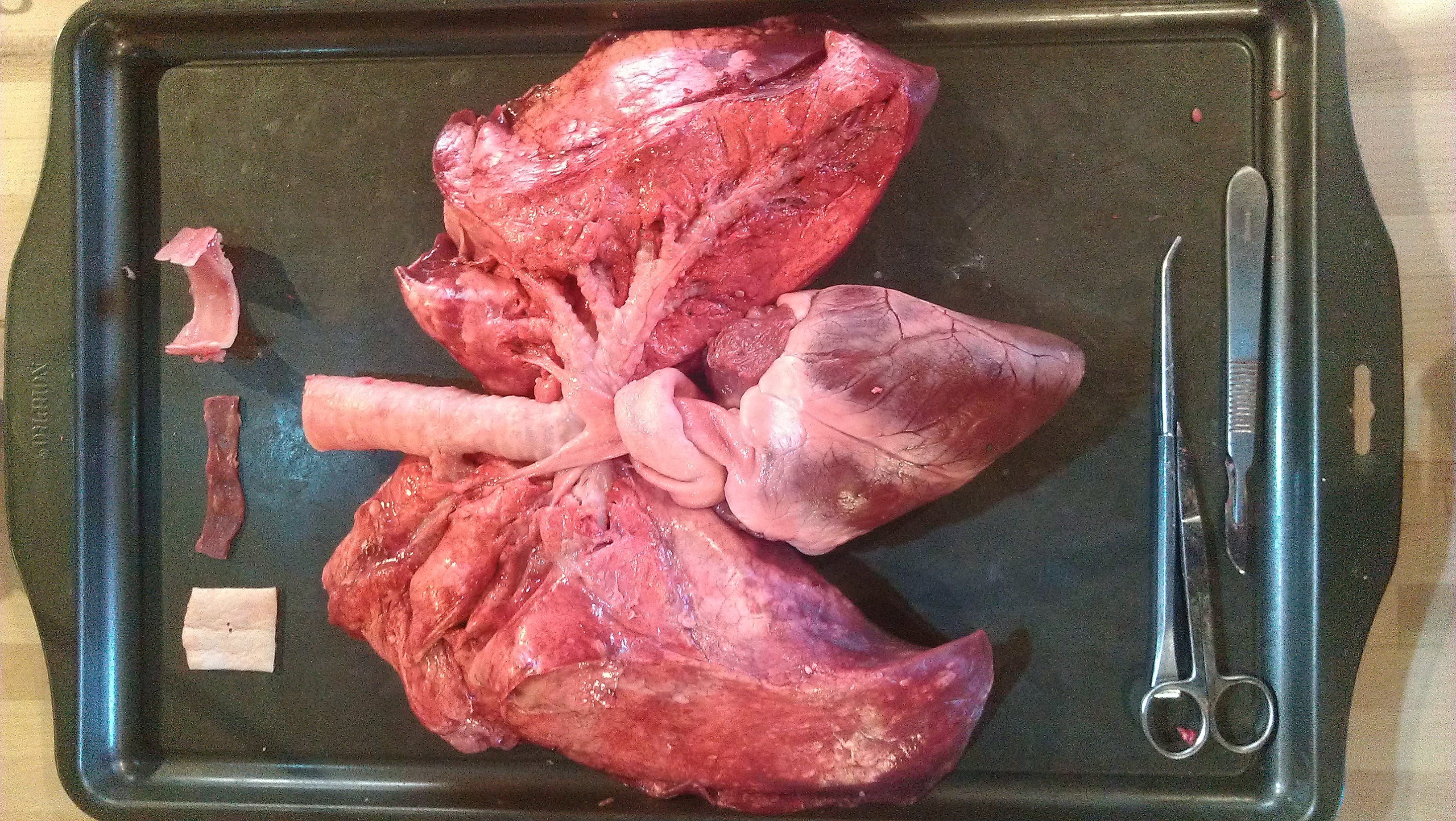 Heart And Lung Workshop
