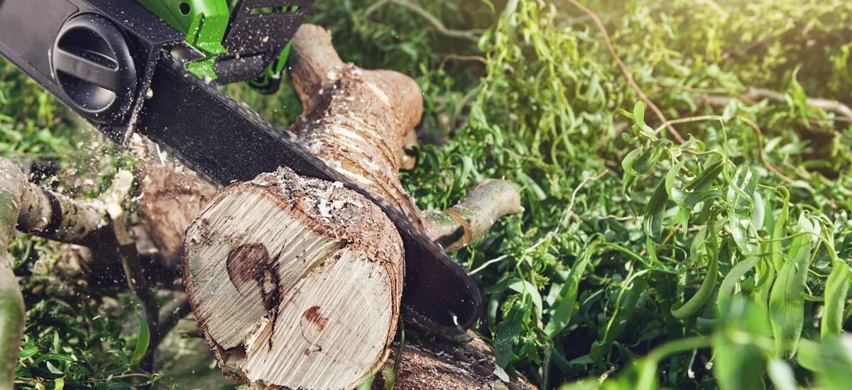 Stump Grinding Services   Miami Tree Company   Lawn Care , Tree Removal Near Palmetto Bay