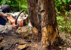 Pinecrest Tree and Stump Removal
